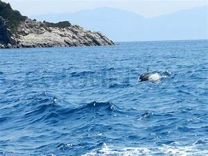 Large Picture Of Dolphins Jumping Out Of The Water ...
