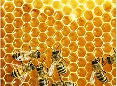 European Week of Bees and Pollinators 2018 – Scientific