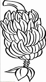 Banana Bunch Coloring Tree Outline Clipart Pages Drawing Bananas Whole Clip Netart Printable Cartoon Getcolorings Getdrawings Email sketch template