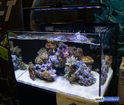 All Marine All Aquarium by C View All In One Aquariums Unveiled By Cobalt Aquatics Reef Builders The Reef And