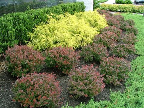 pictures of shrubs and bushes deer resistant plants for the philadelphia area trees shrubs perennials bulbs annuals
