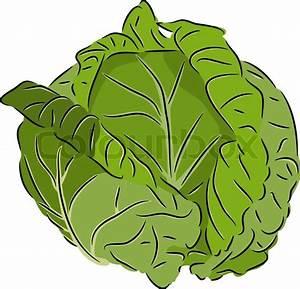 Cabbage Cartoon | www.imgkid.com - The Image Kid Has It!