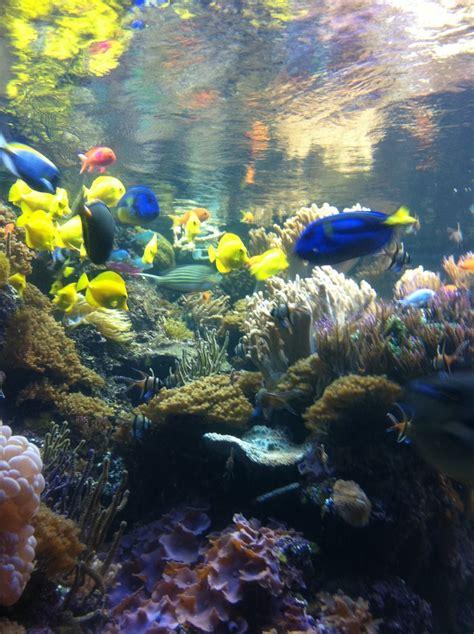 national aquarium  baltimore acuario