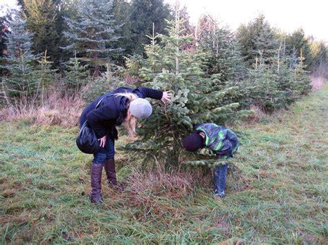 weihnachtsbaum selber schneiden my blog
