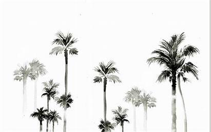 Palm Trees Desktop Summer Wallpapers Background Macbook