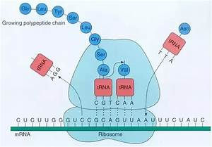 When People Say The Dna Stores Information  What Do They