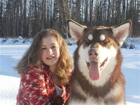 Giant Alaskan Malamute Red Animals Cuz Clearly Im