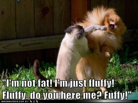 """Funny Dog Pictures  """"i'm Not Fat! I'm Just Fluffy! Fluffy"""