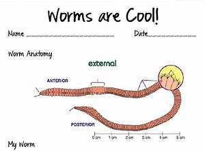 32 Best Earthworms Images On Pinterest