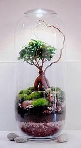 Bonsai Im Glas : sukkulenten im glas im blickfang kreative deko ideen mit pflanzen glas runde und pflanzen ~ Eleganceandgraceweddings.com Haus und Dekorationen