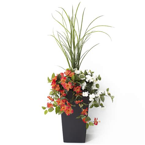 hibiscus exterieur en pot jardini 232 re en pot hibiscus orange et blancs 40 d 233 cors v 233 ronneau
