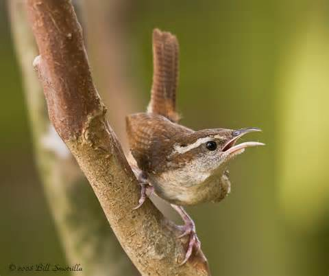 Central Texas Birds Identification