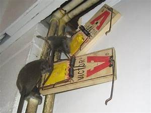 Where To Place Mouse Traps