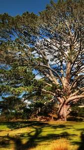 wallpaper tree 4k hd wallpaper sky nature 5260