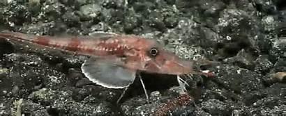Deep Bizarre Fish Weird Sea Pacific