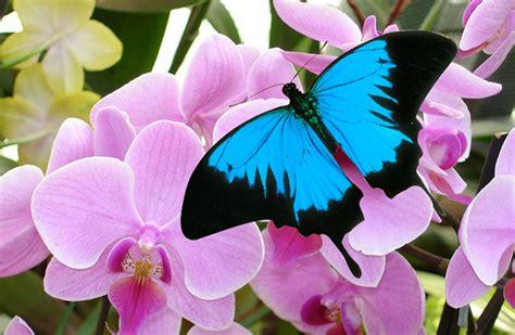 jardins des papillons  bain de couleurs sur la route
