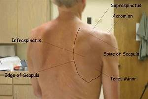 Assessments For Every Joint  Back  Shoulder  Elbow  Hand
