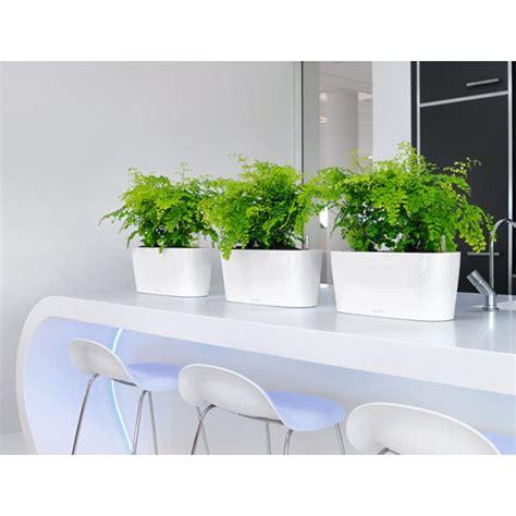 Windowsill Pots - lechuza windowsill planters newpro containers