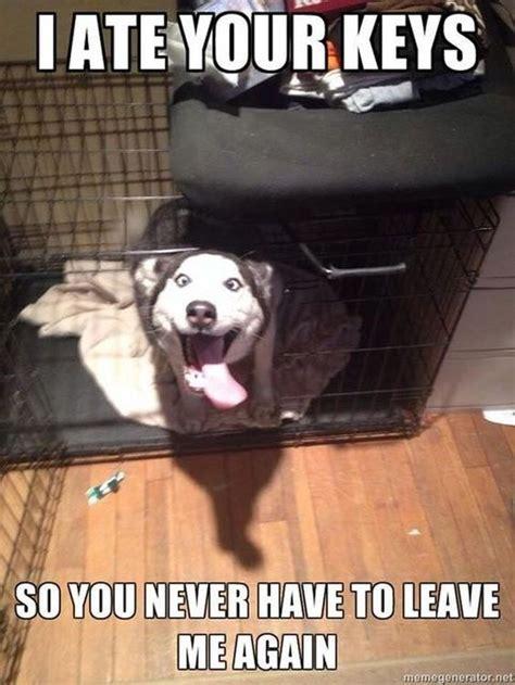 Dog Logic Meme - best 25 funny dog photos ideas on pinterest funny photos with captions i love dogs and