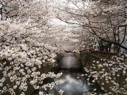 Cherry Japan Water Blossoms Trees Wallpapers Blossom