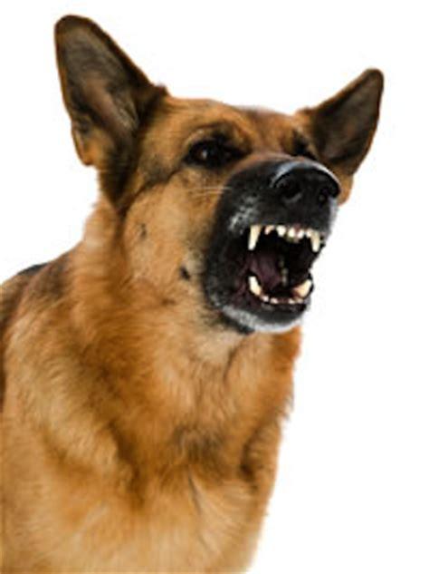 aggressive behaviorthe making   definition ethology