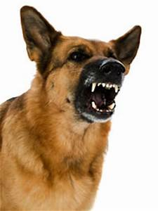 aggressive behavior the making of a definition ethology With aggressive dog behavior