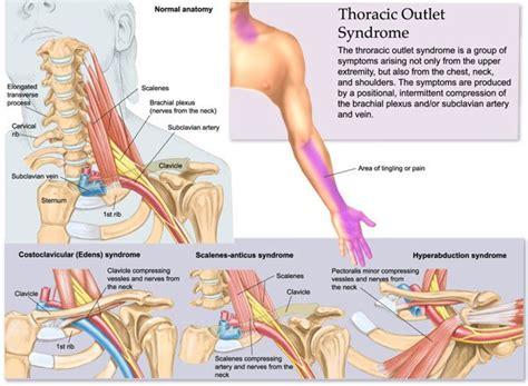 infinite lila scalene muscles  anatomy  motion