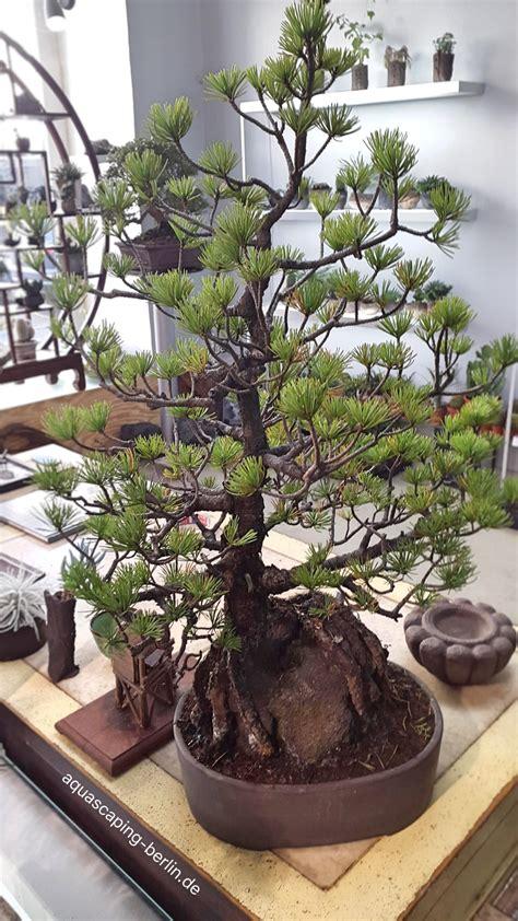bonsai archive aquascaping berlin