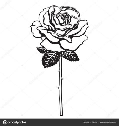 Preto e branco rosa flor com folhas e caule Vetor
