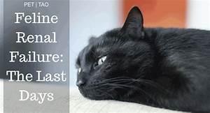 Cat Renal Failure