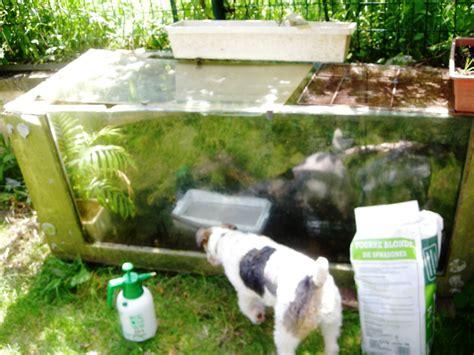 terrarium de jardin l 233 a mon d eau 2