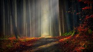 Autumn, Forest, 5k, Wallpapers