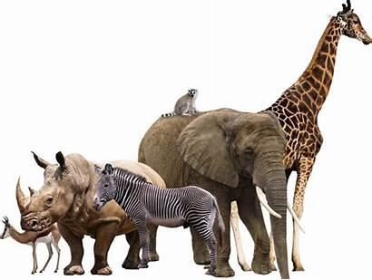 Animals Safari Collage Animal Wild African Deviantart