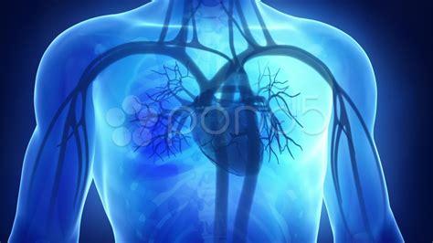cardiology wallpaper wallpapersafari
