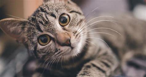 Vai tu zini, kāpēc kaķi ņaud? - Spoki