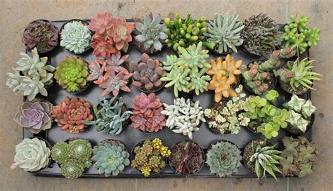 succulents nursery why you should have a succulent in your life