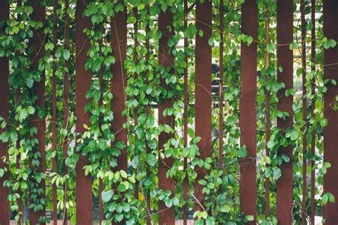 Pflanzen Sichtschutz Im Garten by Garten Sichtschutz Ideen Deshevle Site