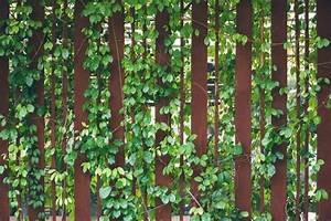 Sichtschutz Garten Ideen : sichtschutz ideen fur den garten 09323720170223sichtschutz pflanzen fur kleine garten filout ~ Eleganceandgraceweddings.com Haus und Dekorationen