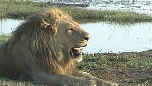Botswana Wildlife Expedition 2012