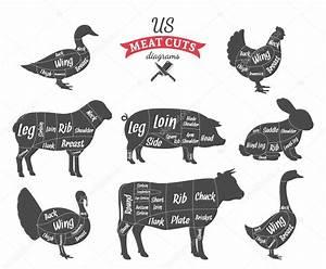 American  Us  Meat Cuts Diagrams  U2014 Stock Vector  U00a9 Counterfeit  87879146