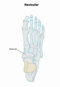 Image Gallery Navicular Area