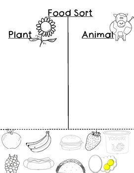 food sort plant  animal  jds darlings teachers pay