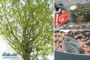 Was Kostet Baum Fällen : kosten einer baumf llung was kostet es b ume zu f llen ~ Orissabook.com Haus und Dekorationen