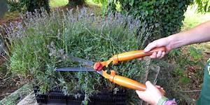 Lavendel Im Topf überwintern : das blaue gold die richtige lavendelpflege das gr ne telefon ~ Frokenaadalensverden.com Haus und Dekorationen