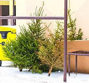 Wann Stellt Man Weihnachtsbaum Auf : ab wann stellt man einen weihnachtsbaum auf depresszio ~ Buech-reservation.com Haus und Dekorationen