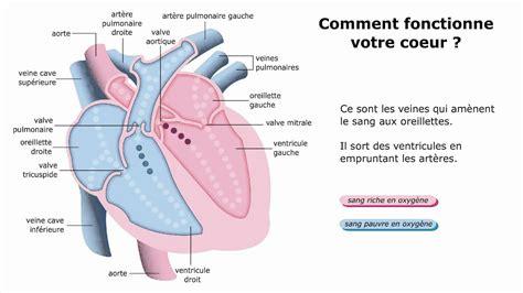 comment fonctionne une le comment votre coeur fonctionne t il