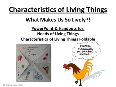 cuisine characteristics what are the needs and characteristics of living things