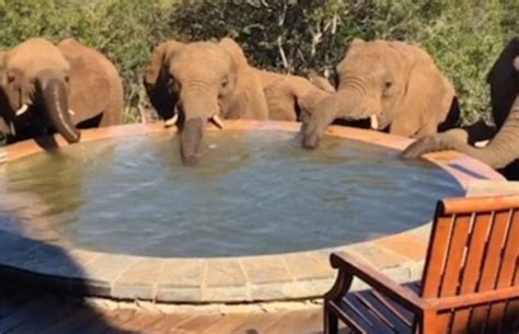 Tourist Wakes Up To Five Elephants Drinking Water From Her