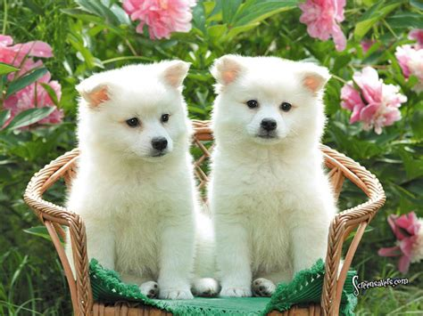 Funny Cute Dogs And Puppies Cute Puppies