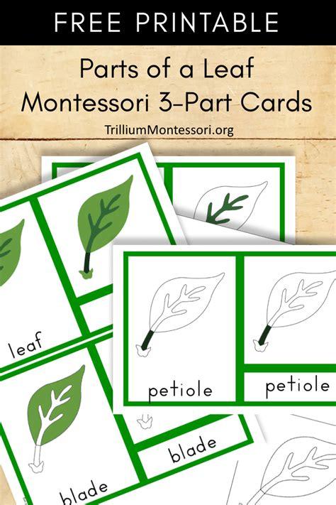 Free Montessori Printable Parts Of A Leaf  Trillium Montessori